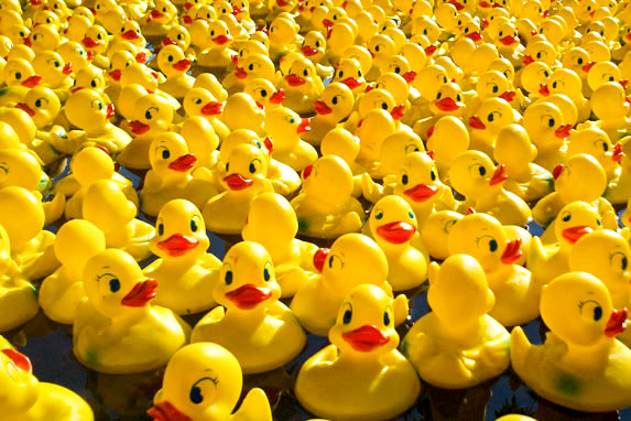 Killin Duck Race set for Sat 2nd May